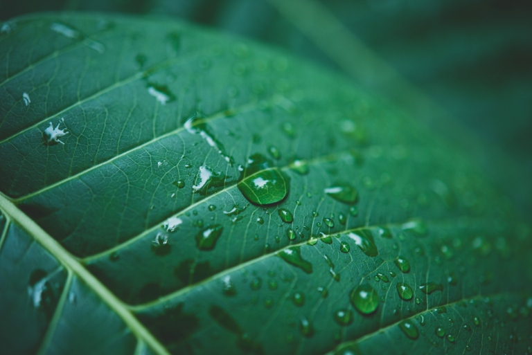 How Does Nanotechnology Impact the Environment?